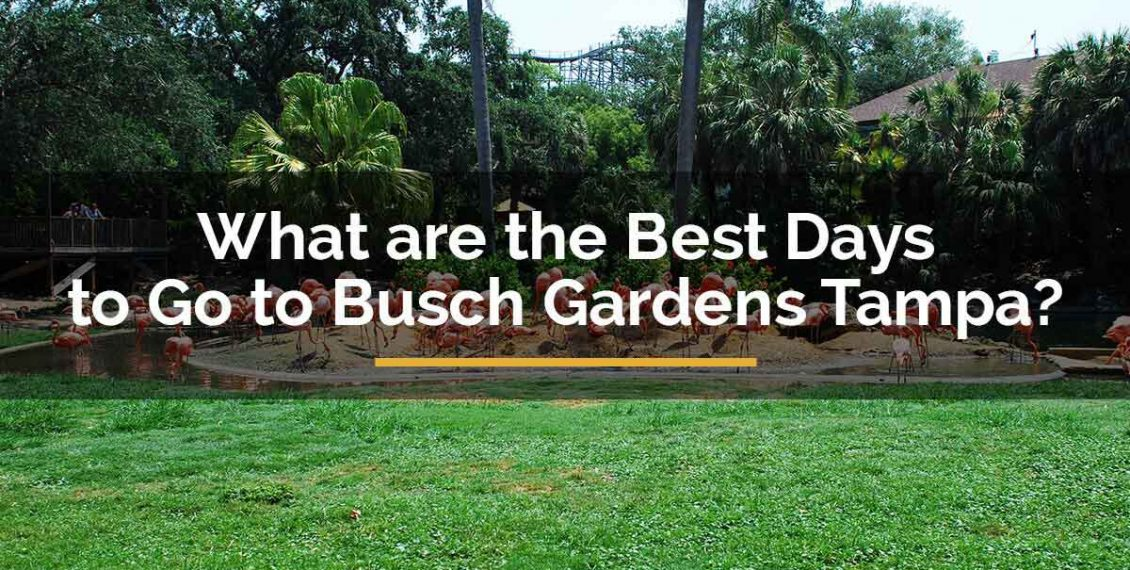 best days to-go to busch gardens tampa