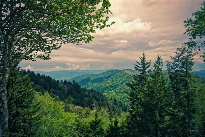 summer in national park