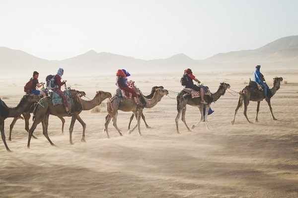 group of travelers riding camels