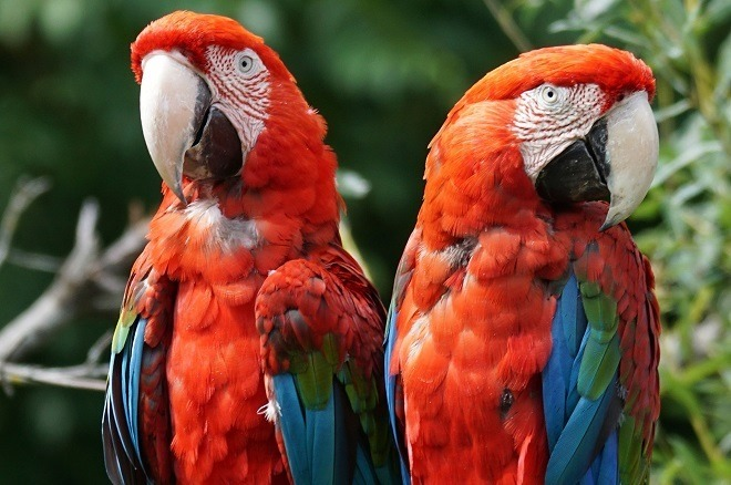 things to do in sentosa island meet parrots at animals and birds encounter