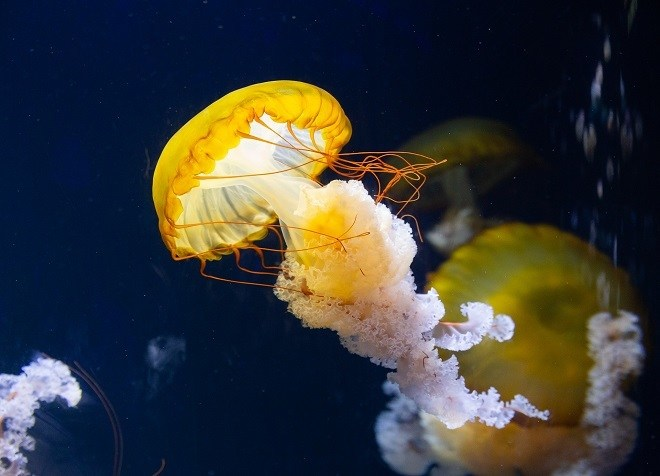 top things to do in sentosa island sea aquarium
