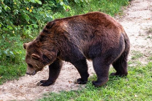 Bear Memphis Zoo